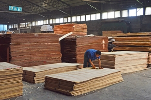 君利木业厂房胶合板预压区